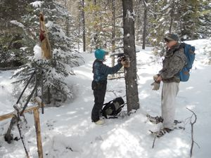 Researchers Dr. Audrey Magoun and Pat Valkenburg set up a typical wolverine camera site