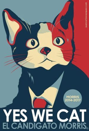Morris the cat - Mexico elections