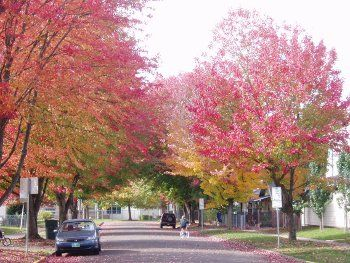Fall color along a street in Salem Oregon
