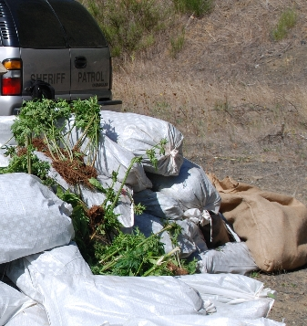 Police in Corvallis say they seized almost 8,000 plants 0-24-07